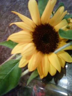 名前の花2